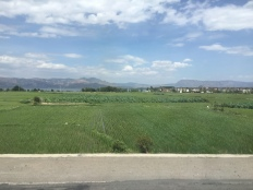 Dali - 1st June